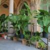 Orticola di Lombardia 5 – 6- 7 maggio 2017-  Giardini Indro Montanelli – Milano