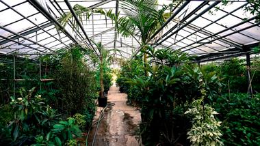 2-piante-tropicali
