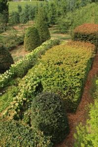 Hydrangea e Parrotia persica